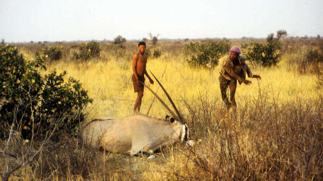 IQ and Cleverness are not the same bushmen  other