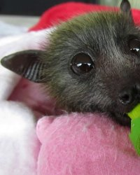 The Truth About Bat Soup