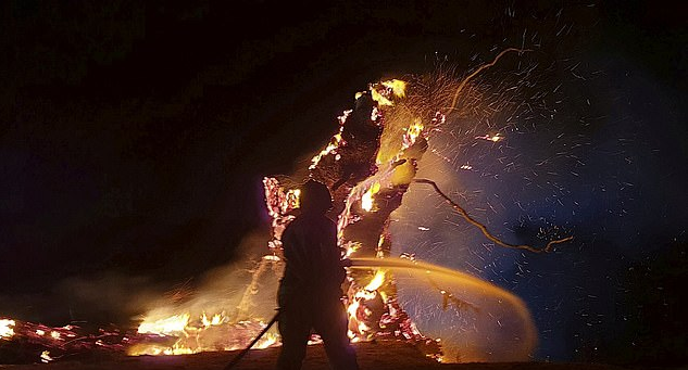 Sacred Solstice Tree Burned By Arsonists